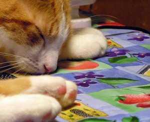 cat sleep by Sister72 flickr.com:photos:sis:39075916:sizes:m: