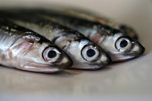 closeup photo of 3 mackerel fish