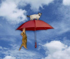 Photo drawing of cat hanging from umbrella in the sky