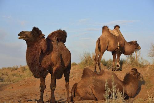 Camel Case in Canada, Eh?