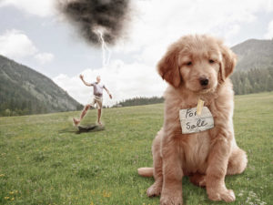 lightning striking a man who has put a for sale sign on a puppy